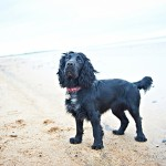 BEN & BESS pet dog portrait photos on whitley bay beach, newcastle 004