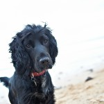BEN & BESS pet dog portrait photos on whitley bay beach, newcastle 007