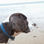 BEN & BESS pet dog portrait photos on whitley bay beach, newcastle 008