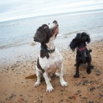 BEN & BESS pet dog portrait photos on whitley bay beach, newcastle 021