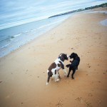 BEN & BESS pet dog portrait photos on whitley bay beach, newcastle 034