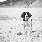 BEN & BESS pet portraits of old dogs and puppies on the beach in north east 017b&w