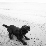 BEN & BESS pet portraits of old dogs and puppies on the beach in north east 020bw