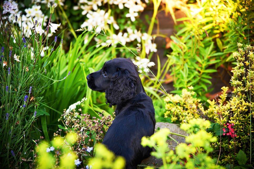 Bessie pet puppy portraits newcastle studio