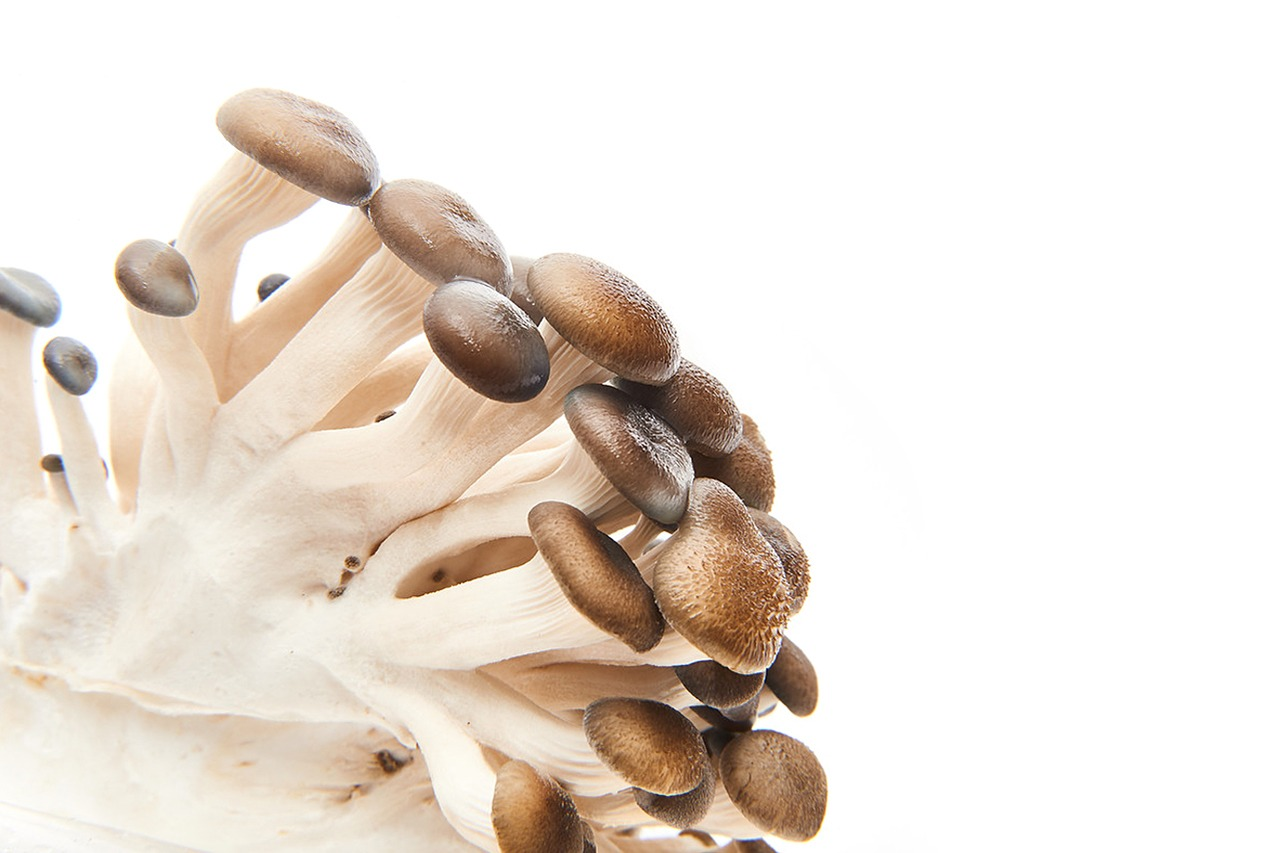 Urban Mushrooms YMCA Product Photography in Newcastle Kitchen 4