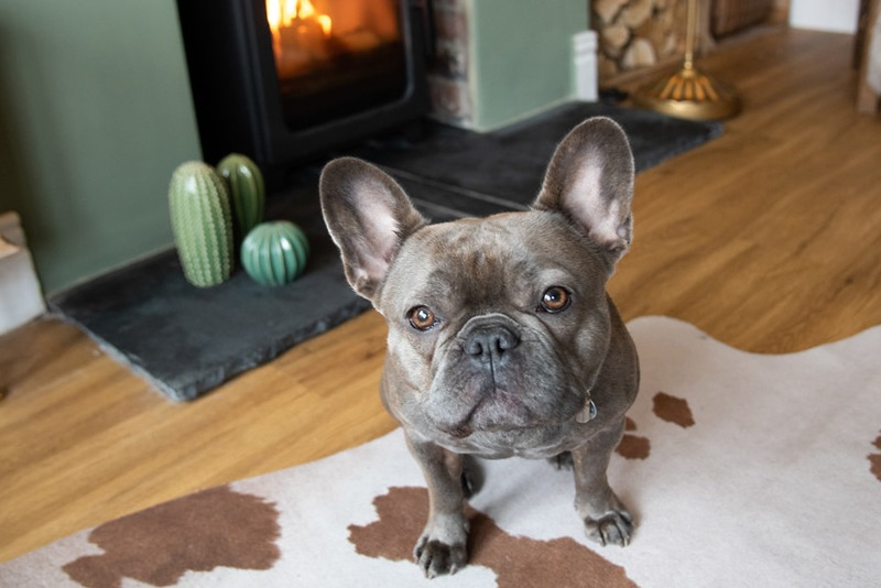 Interior design photography Newcastle with frenchie sitting by the fire