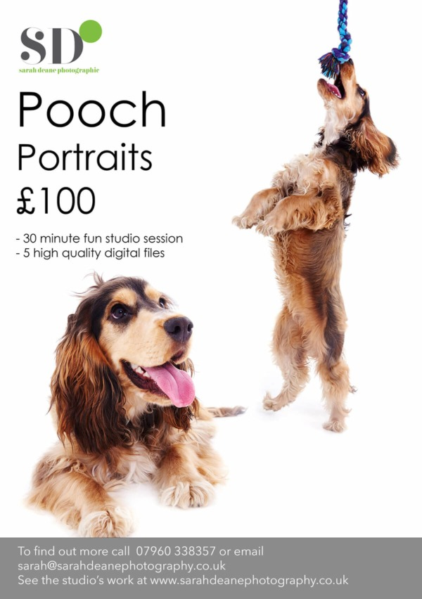 Pet Portraits at Newcastle Photography Studio